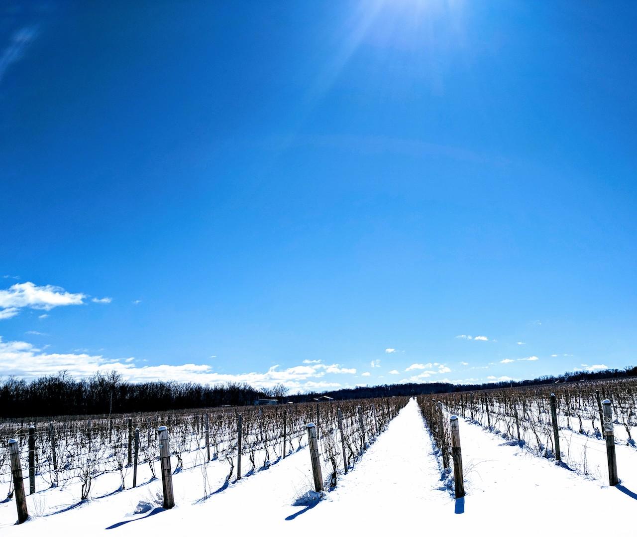 Vineyard view over Seneca Lake (photo)