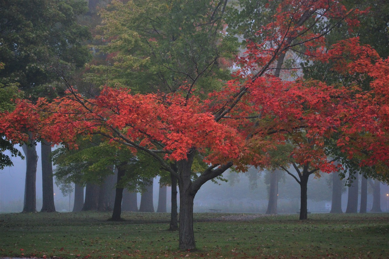 Foggy morning at Seneca Lake (photo)